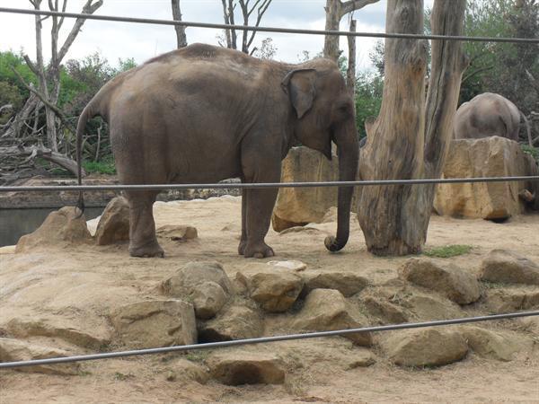 We liked the elephants.