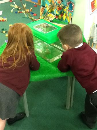 Examining the tadpoles!