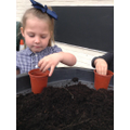Planting our beans