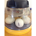 Incubator for keeping the eggs warm