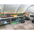 Tidied and organised polytunnel.