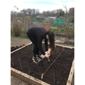 Planted onions.