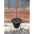 Filled large new pots by shed.