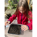 Gerda out in the garden planting seeds.