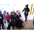 The children meet Attenborough the goat.