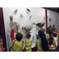Looking at extinct animals