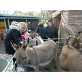 We meet the donkeys.