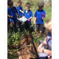 Forest School - Bug Hunt.