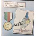 Winkie the service pigeon