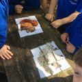 Forest School - we made two pictures.