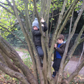 Forest School - Free play.