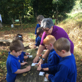 Forest School - putting the parts together.