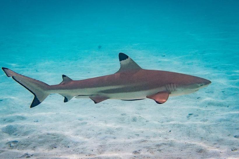 Sharks Class Year 1
