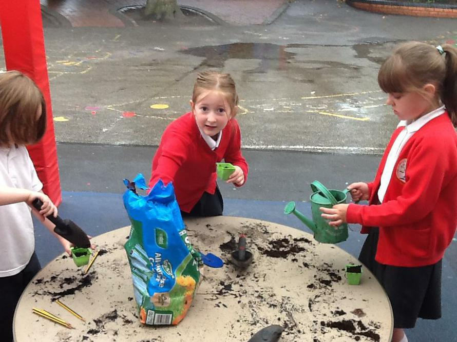 We planted seeds with Miss Bailey.