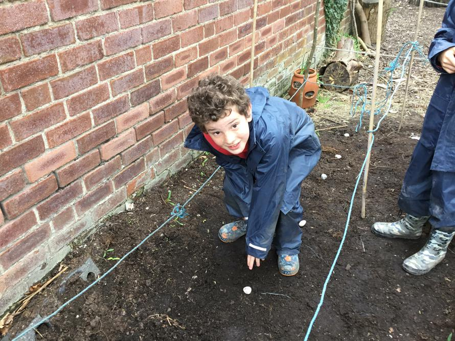 Finley planting his sunflower seeds.