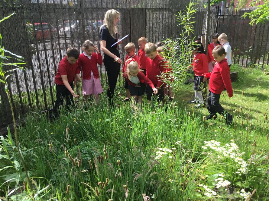 Forest School's Wild Patch.
