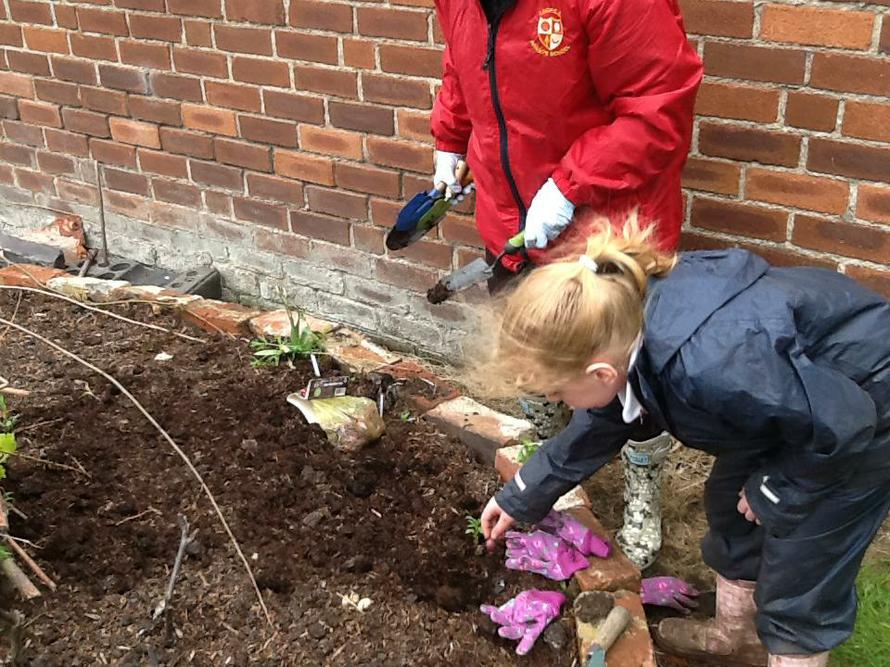 Planting red onions in our African Keyhole Garden