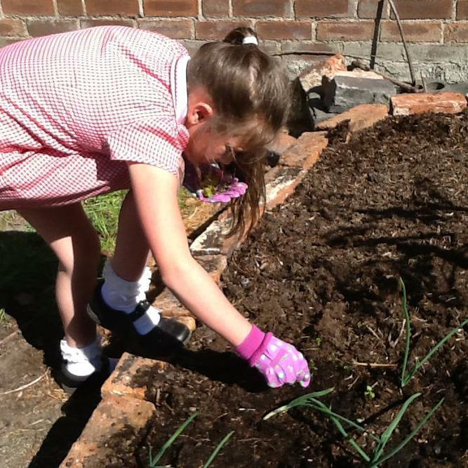 Amelia was weeding the African Keyhole Garden.