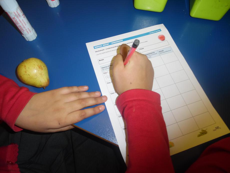 Recording observation of food at the start.