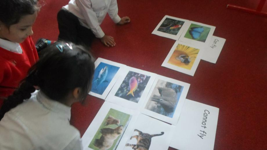 Sorting animals in Science