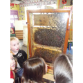 Learning about the importance of bees!