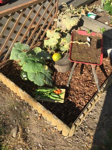 Our vegetable garden.