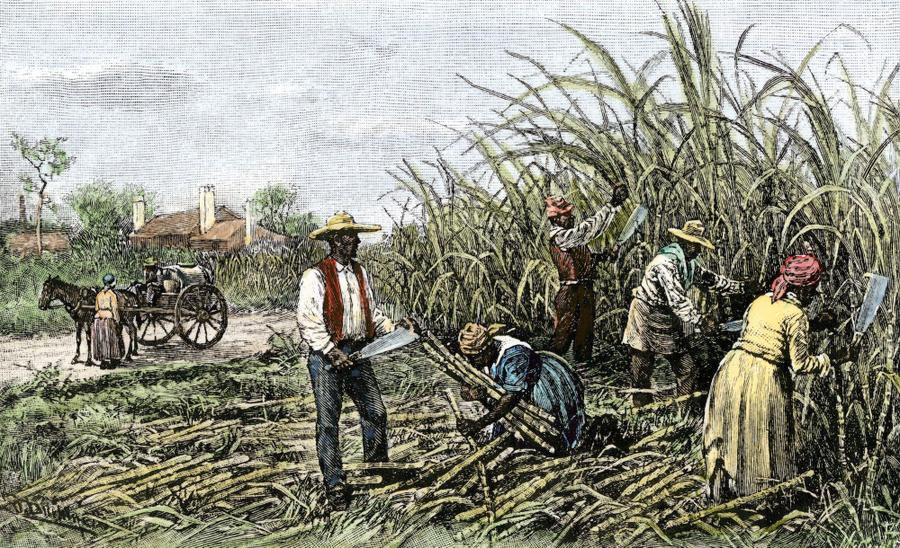 Life on the plantations