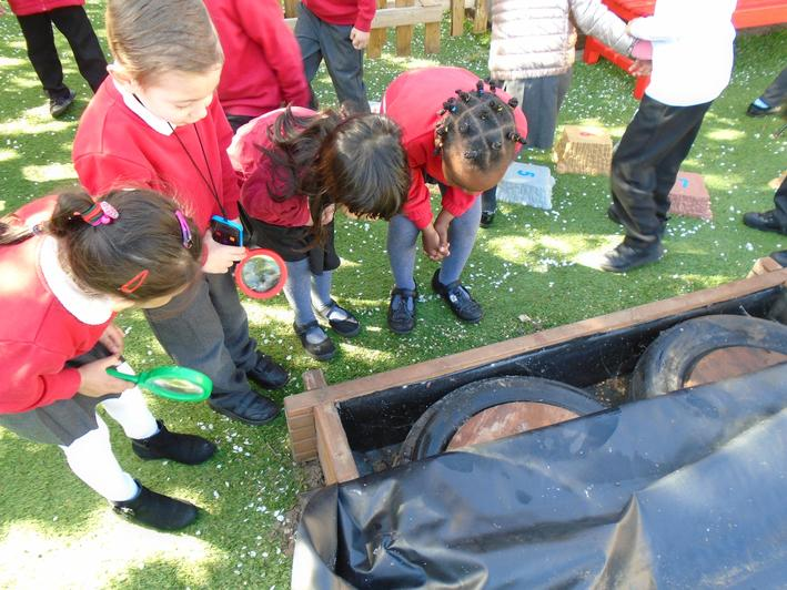 Looking for minibeasts in the garden.