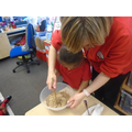 EN: Mixing to make our nests.