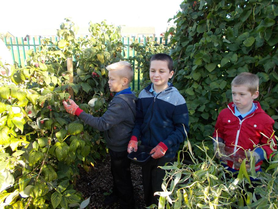 Picking our fruit and vegetables