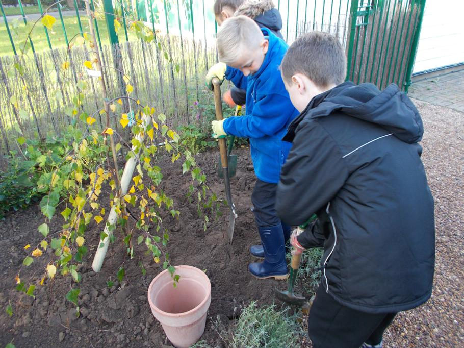 Planting new trees in the Memory Garden