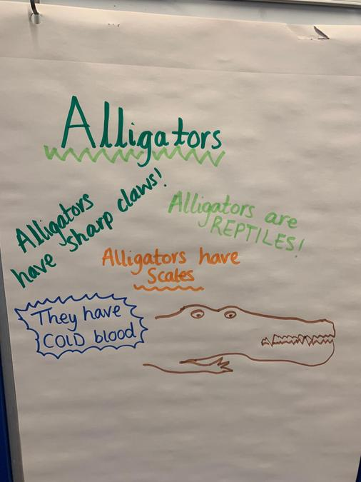 Here is my example of a poster about an Alligator. See if you can make your one better :)