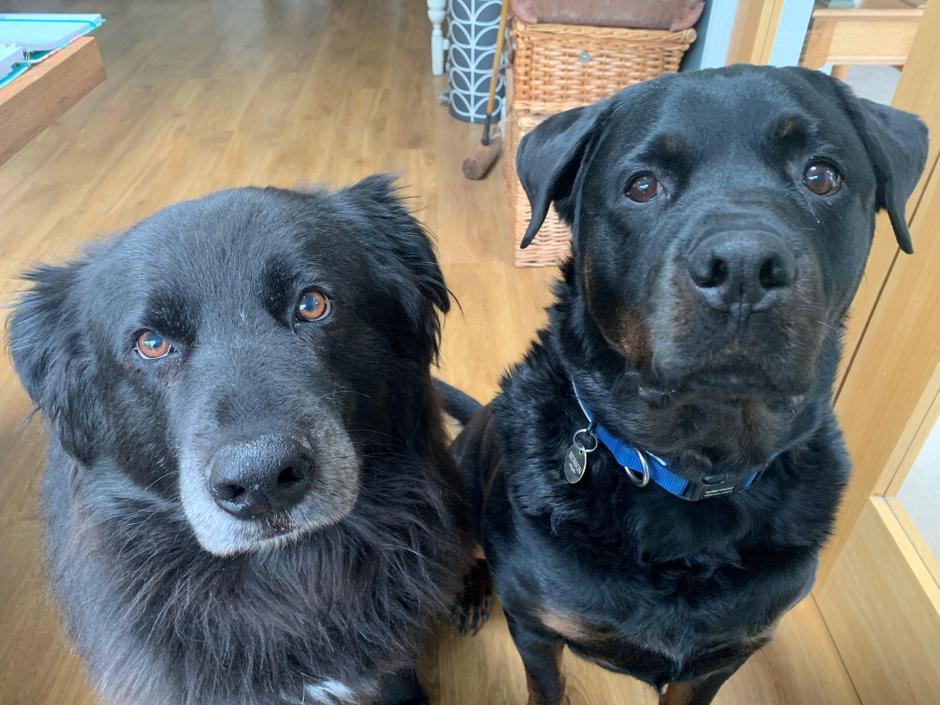 Mrs Trusler's classroom helpers - Bruno and Benson