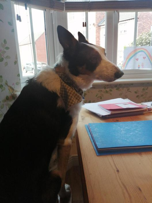 Murphy has been helping Isabel with her work!