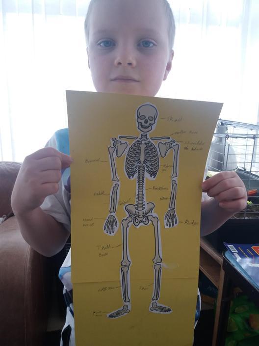 Labelling a skeleton