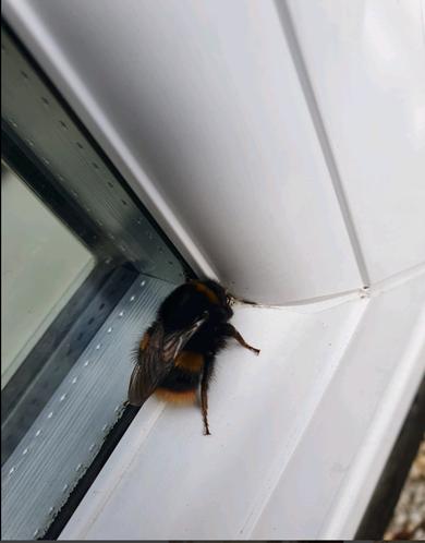Mihaela - Bumblebee