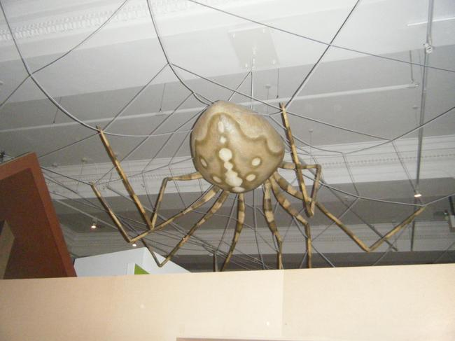 The huge spider on the ceiling!