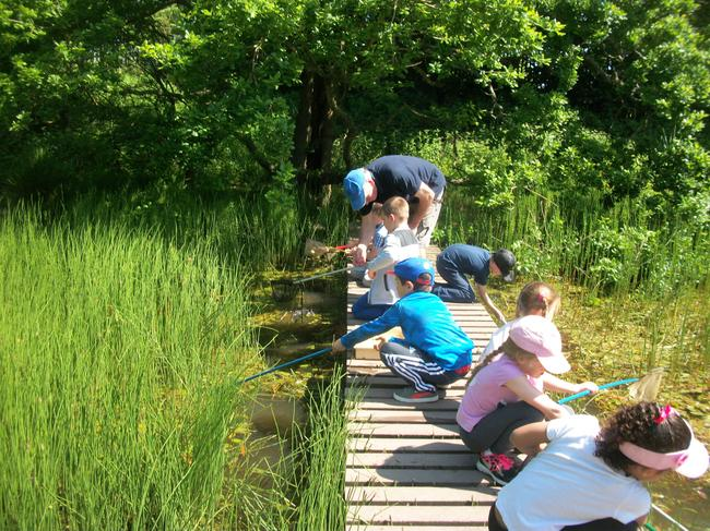 Pond dipping was so much fun!