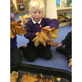 We counted different amounts of leaves.