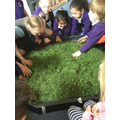We used cut grass to make base for our Jungle.