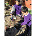Looking for bugs and small insects.