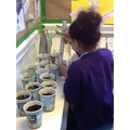 measuring the growth of our crops