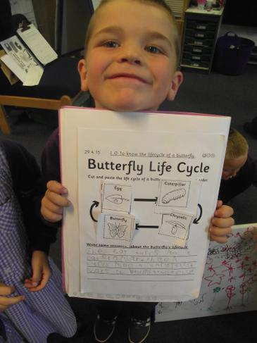The Butterfly Life Cycle - fantastic work!
