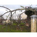 Bird feeders are up - 19th Jan