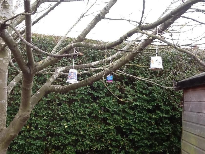 We hung the bird feeders in the trees