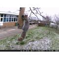 Squirrel pretending to be a bird