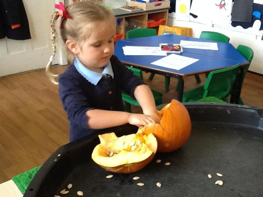 Exploring the inside of a pumpkin.