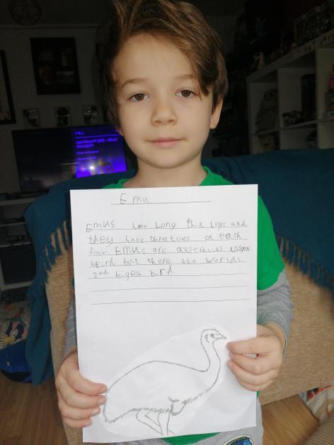 Zachary's favourite Australian animal is an emu.