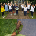 One reception bubble at school made this habitat for a frog we found!