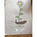 Daniyal has labelled a plant- super work!